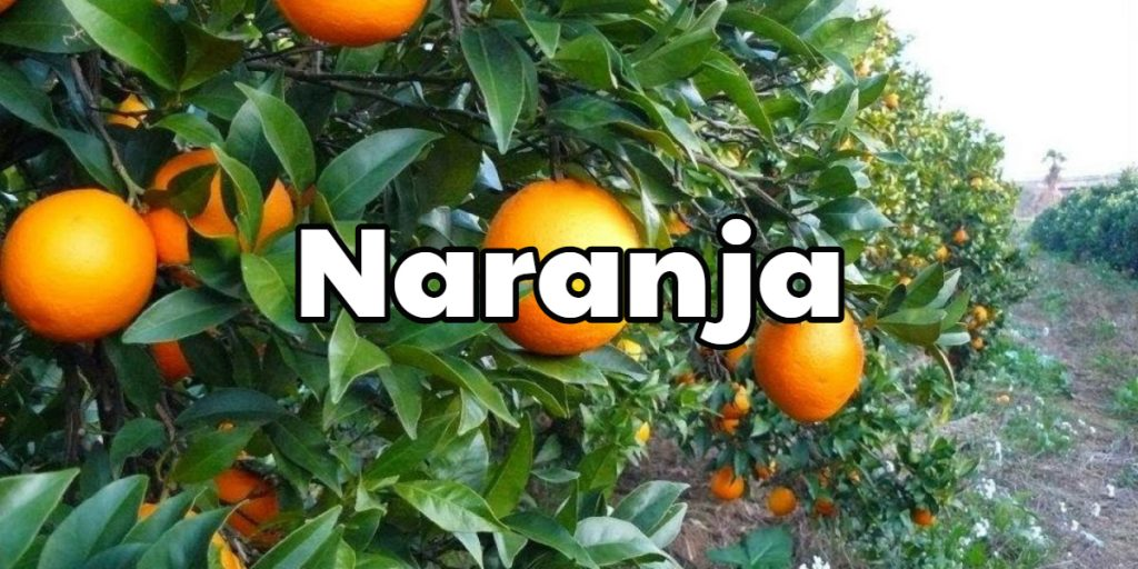 Propiedades de la naranja y sus beneficios medicinales 【2018】