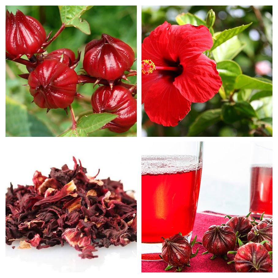 Como tomar el agua de la flor de jamaica para adelgazar