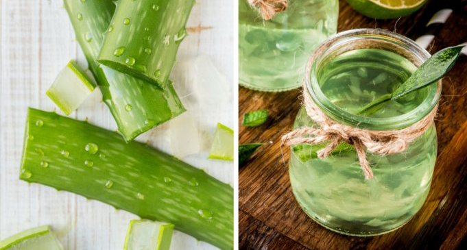 Beneficios y propiedades del Aloe Vera